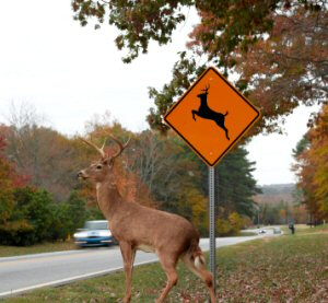 7-Safe-Driving-Tips-For-Deer-Season